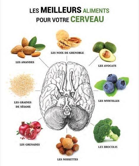 comment bien nourrir son cerveau