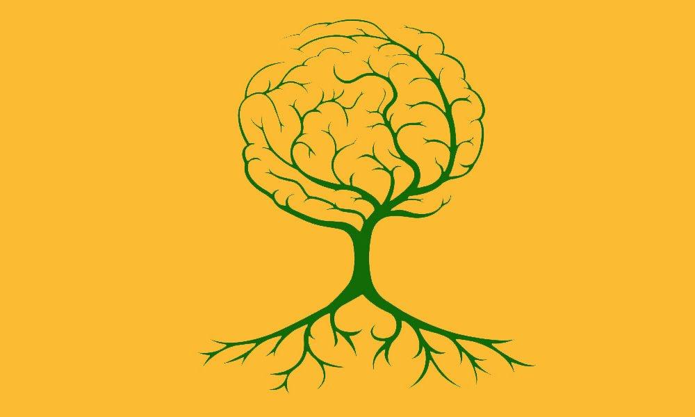 qu'est ce que la neuroplasticité
